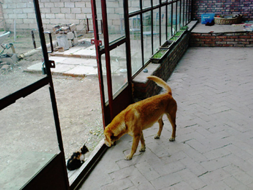 Qinghai-a3